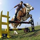 Животные в фотографиях за неделю (4 - 10 апреля 2011)