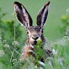 Животные в фотографиях за неделю (25 - 30 апреля 2011)