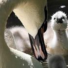 Животные в фотографиях за неделю (9 - 15 мая 2011)