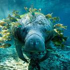 Удивительный подводный мир. Часть 2