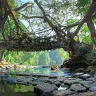 """""""Живые"""" мосты в Индии"""