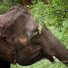 Дом для слонов - Национальный парк Удавалаве в Шри-Ланке