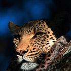 """Выставка """"Живая природа Ботсваны"""""""