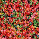 Осенние краски вулканов Камчатки