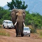 """""""Я никогда не думал, что буду убит слоном"""""""