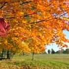 Листопад, листопад. Золотая осень уходит