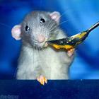 Позитивные мышата
