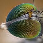 Совершенство природы: Конкурс микрофотографии от Никон 2010