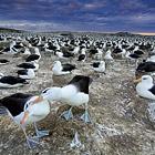 Великие миграции от National Geographic