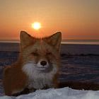 Зима на Камчатке