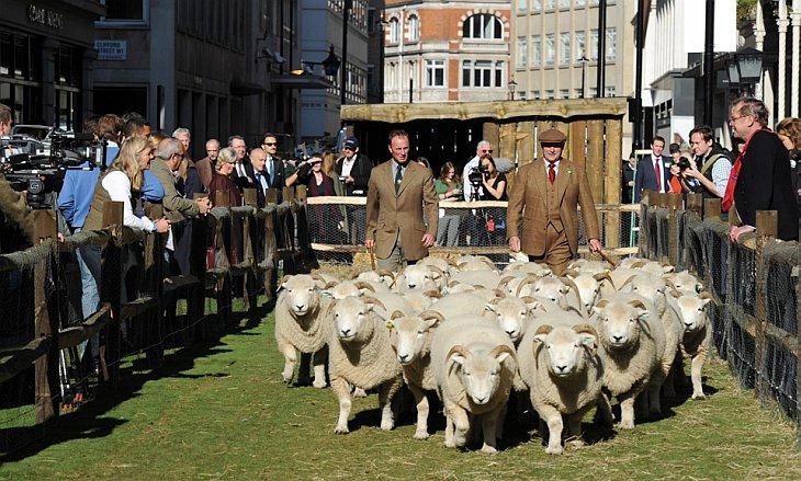 Пастухи ведут овец по улице Сэвил Роу в Лондоне, в понедельник, 11 октября 2010