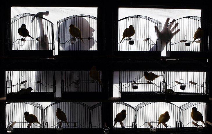 Силуэт Пэта Маккифри, сделавшего ремонт в доме для птиц в городе Рандалстаун, Северная Ирландия