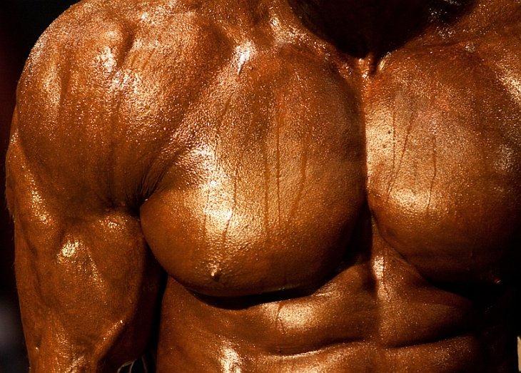 Мышца произвольная фото