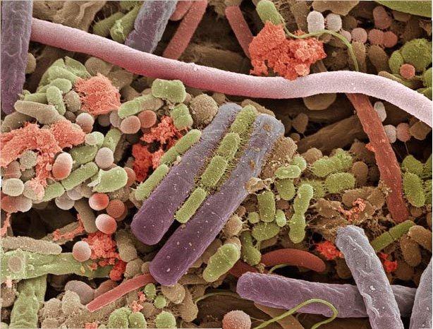 Бактерии на человеческом языке: