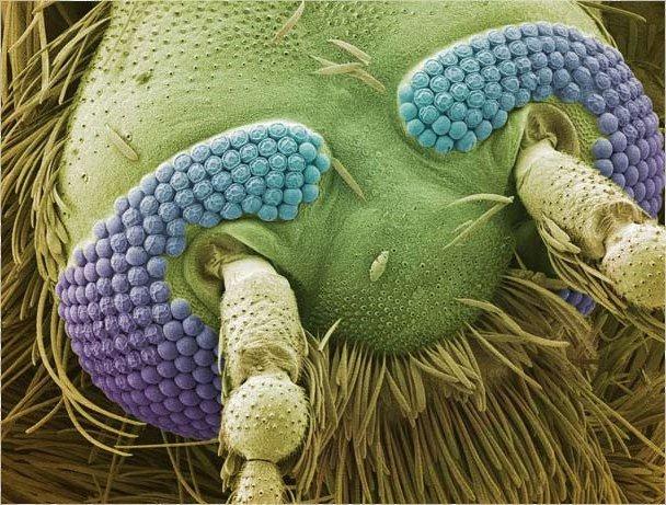 Голова комара: