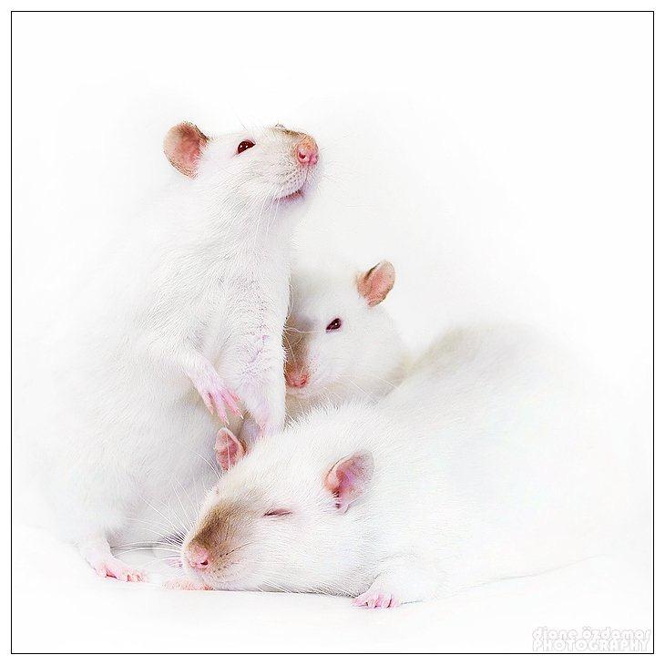 Позитивные мышата от Diane Ozdamar