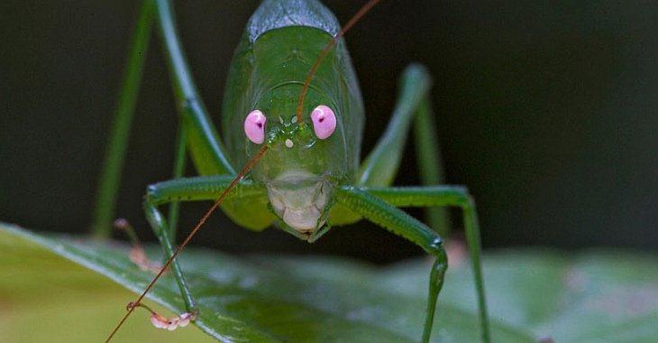 Сотни новых видов обнаружены в Папуа-Новой Гвинее