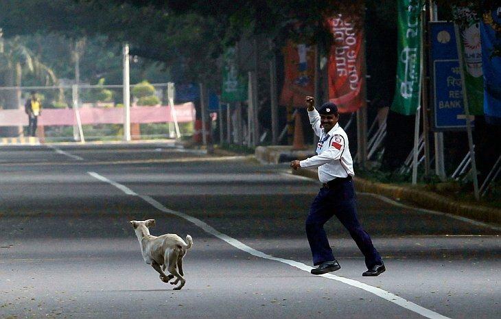 Офицер прогоняет бродячих собак с марафонской трассы во время финала на Играх Содружества в Нью-Дели 14 октября 2010 года.