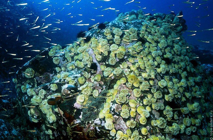Рифообразующие кораллы