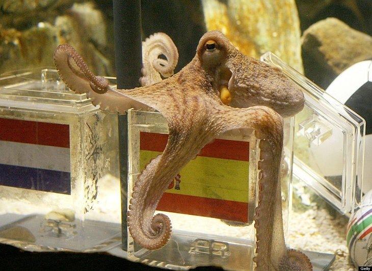 Умер знаменитый осьминог-предсказатель Пауль из Германии