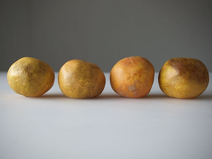 Обычные грейпфруты