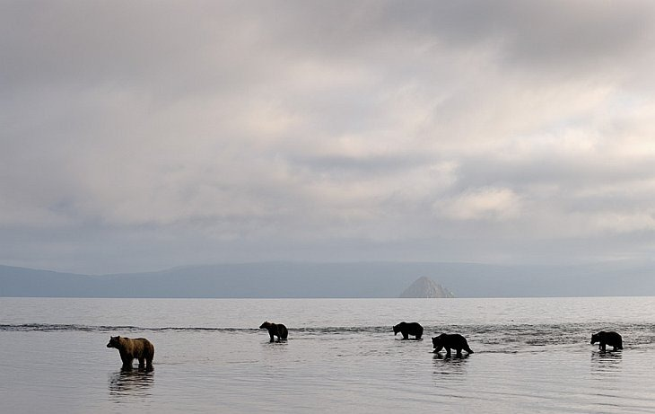 Waiting for fish/n South Kamchatka Sanctuary<><>South Kamchatka Sanctuary; bear; Kamchatka; Kuril Lake; salmon; sockeye; spawning