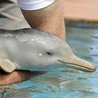 Позитив: спасенный дельфинчик