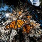 Лучшие фотографии ноября 2010 по версии National Geographic