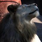 Красота животных в фотографиях