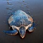 Животные в фотографиях за неделю (20 - 27 марта 2011)