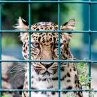 Крупнейший ландшафтный зоопарк в Европе
