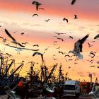 Море птиц в Марокко