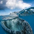 На грани двух миров: что скрывается под водой