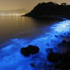 Свечение моря в Гонконге