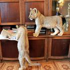 Необычные домашние животные