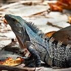 Животный мир Коста-Рики. Часть 1