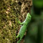 Животный мир Коста-Рики. Часть 2