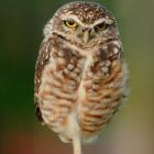 10 птиц с самыми необычными защитными механизмами