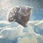 Снежные животные