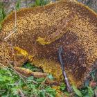 Неизвестные Гималаи: охотники за медом диких пчёл. Часть 2