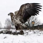 Чернобыльские животные