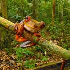 Редкие растения и существа Южной Америки