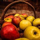 Время собирать яблоки или как делают Кальвадос