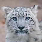 Интересные факты о самом скрытном звере