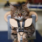 Как китайцы котов и собак иглами лечат