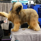 Westminster Kennel Club 2018