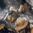 Неизвестные Гималаи. В гостях у диких пчел