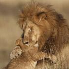 Вспоминая львов