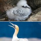 Птенцы птиц: кто на кого похож