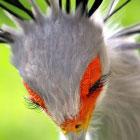 Потрясающие птицы